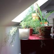 Kizöldült a zöld irodánk