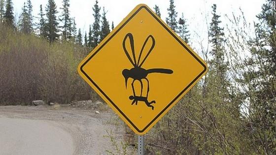 Mutáns szúnyogok támadhatnak!