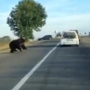 Csíkborzsován sem szégyenlősek a medvék