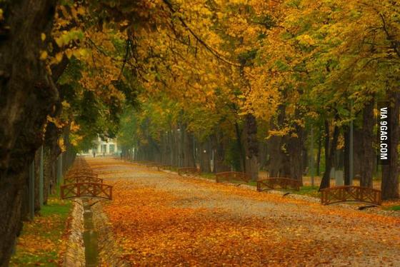 Kolozsvári sétatér ősszel - http://9gag.com/gag/ae397dQ/if-autumn-is-a-thing-now-i-give-you-cluj-in-transilvania
