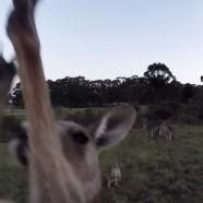 Most egy kenguru zúz szét egy drónt