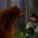 A medve elintézi a facipős holland atyafit: megjelent az Igazi Csíki új reklámja