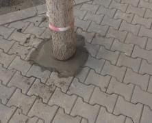 Vásárhelyen betonnal ápolják a fákat