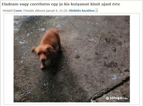 Jó kis kutya innen: http://geccodejoakecod.444.hu/2016/01/20/art-gecco-haszonallat