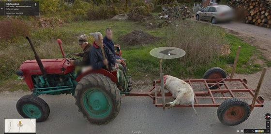 #17 Szerbia- Levágott disznó szállítása Szerb módra