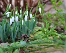 Bekeményített a tavasz a Transindex udvarán