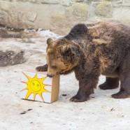 Jósoltak a Marosvásárhelyi Állatkert medvéi