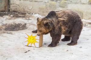 vásárhelyi medve jó
