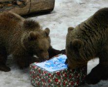 Megjósolták az időt a marosvásárhelyi állatkert medvéi