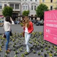 Így szeretjük a reklámot: árvácskák Kolozsvár főterén