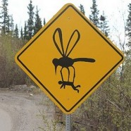 Ennél veszélyesebb út nincs is: Alaszkában elragadhatnak a szúnyogok, vagy ütközhetsz egy repülővel!