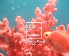Pantone: az élő korall lesz az év színe 2019-ben
